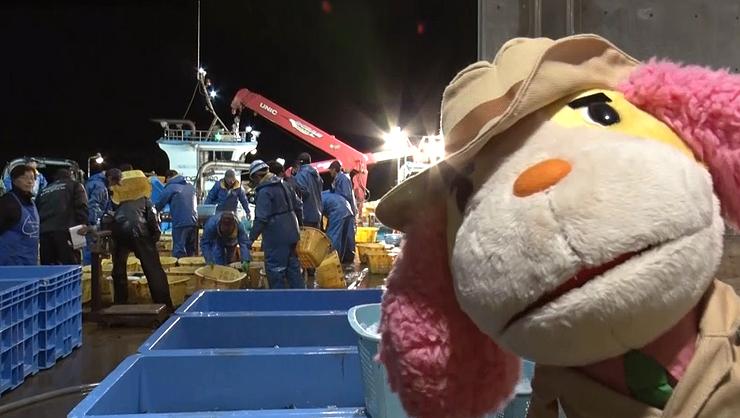 富山市が配信を始めた動画の一場面。ブリがテーマとなっている((C)TOYAMACITY/DLE)