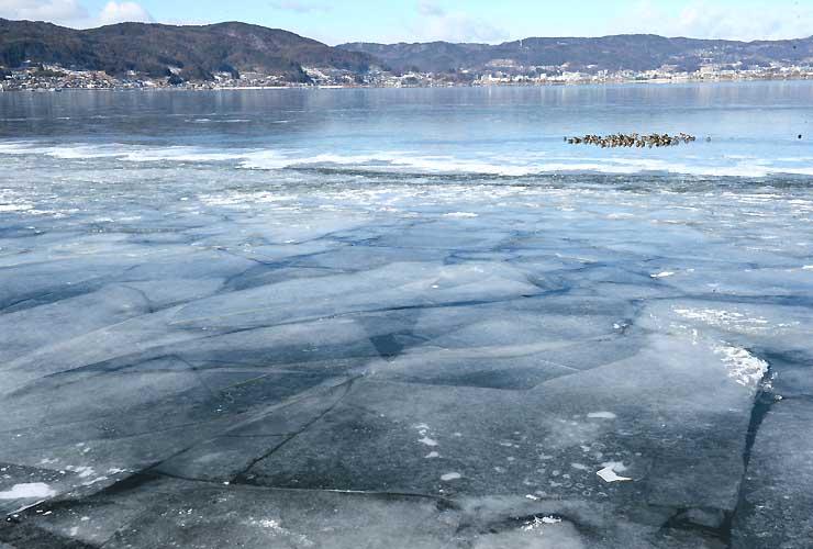 全面結氷した諏訪湖。沖では水鳥が集まって休んでいた(右奥)=25日午前10時15分、諏訪市豊田