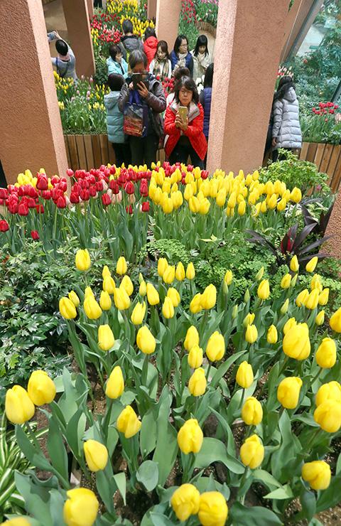 色とりどりに咲き誇るチューリップ=チューリップ四季彩館
