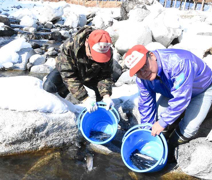 アマゴの成魚を放流する天竜川漁協の組合員ら