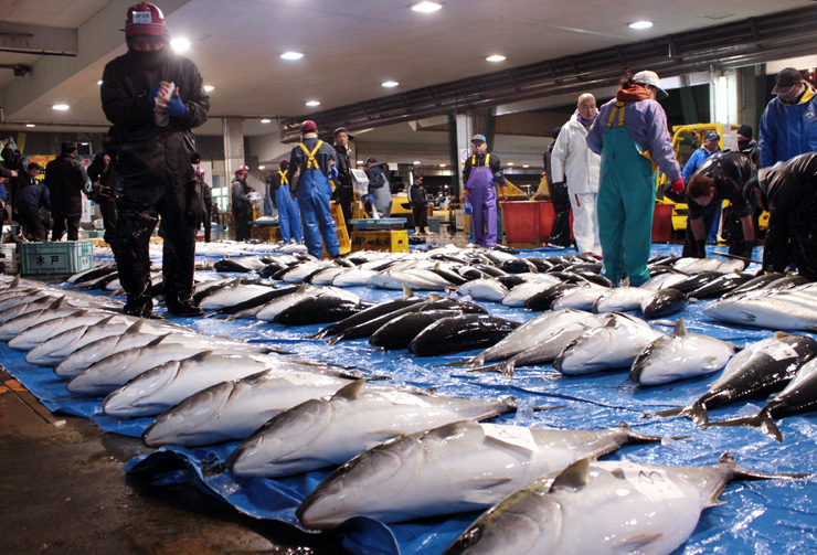 氷見魚市場に並んだひみ寒ぶり。2016年度の水揚げは2万7125本だった=1月上旬、氷見市比美町