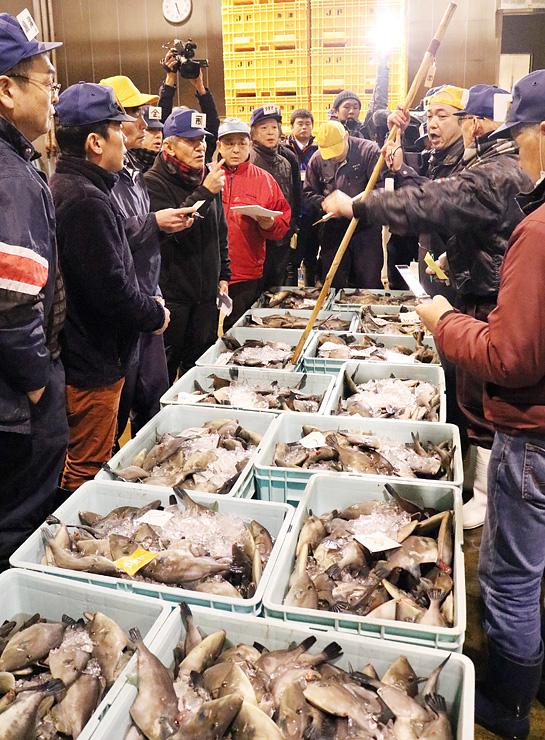 水揚げされたばかりの魚津寒ハギの競りをする漁業関係者=魚津おさかなランド