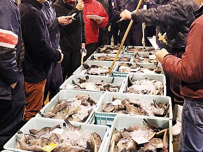 「魚津寒ハギ」漁が最盛期 魚津港活気づく