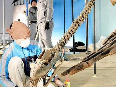 新常設展示の14点準備OK 県立恐竜博
