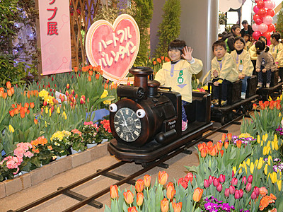 栽培100年目祝う 春を呼ぶチューリップ展開幕
