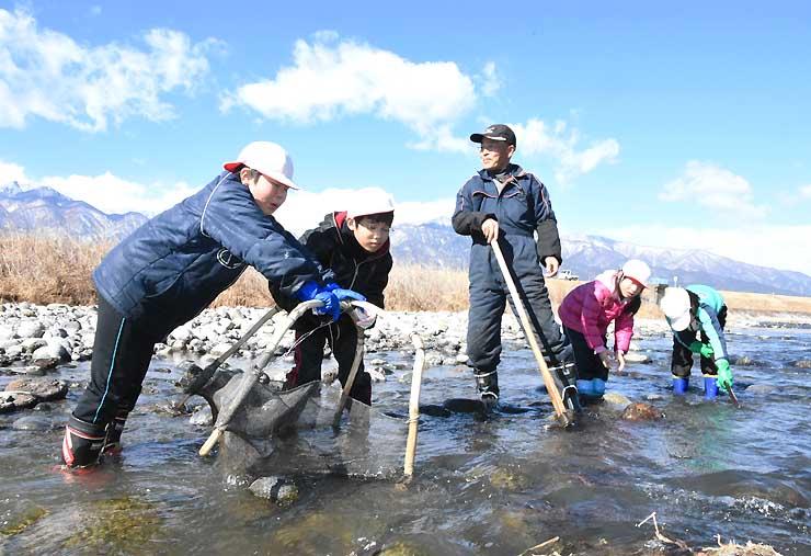 四つ手網を使ったざざ虫漁に挑戦する子どもたち=13日、駒ケ根市の天竜川