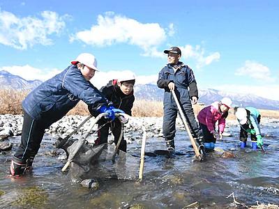 伝統の漁、児童こわごわ 駒ケ根の天竜川でざざ虫捕り挑戦