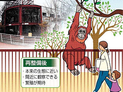 オランウータン、本来の生活再現 長野・茶臼山動物園再整備へ
