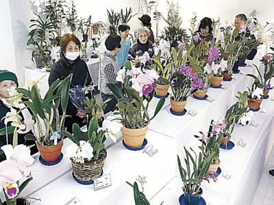 華麗なラン200鉢 金沢で展示始まる