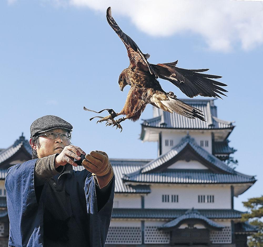 26日の実演に向けて、放鷹のリハーサルを行う鷹匠=金沢城公園