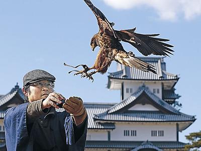 青空に雄々しく 金沢城公園、きょう放鷹術実演