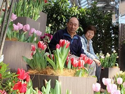 咲く春心明るく 新潟県立植物園