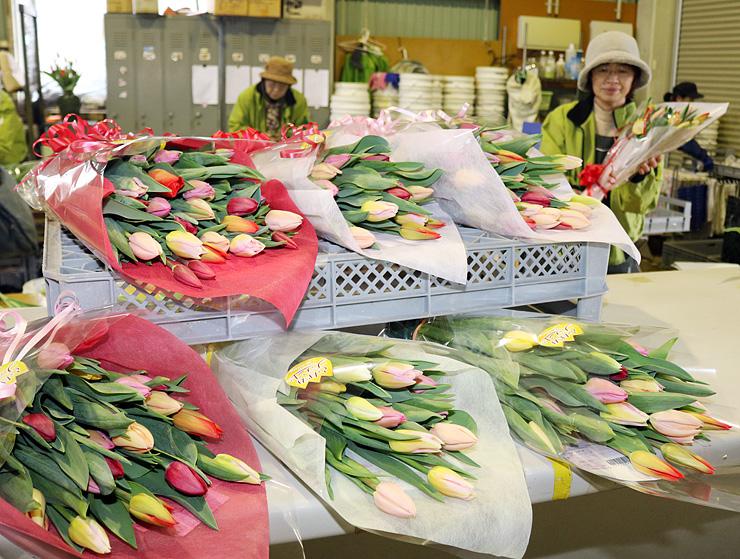 出荷されるチューリップ切り花の花束。砺波市の年間の切り花出荷量は過去最多になる見通しとなった=砺波市内