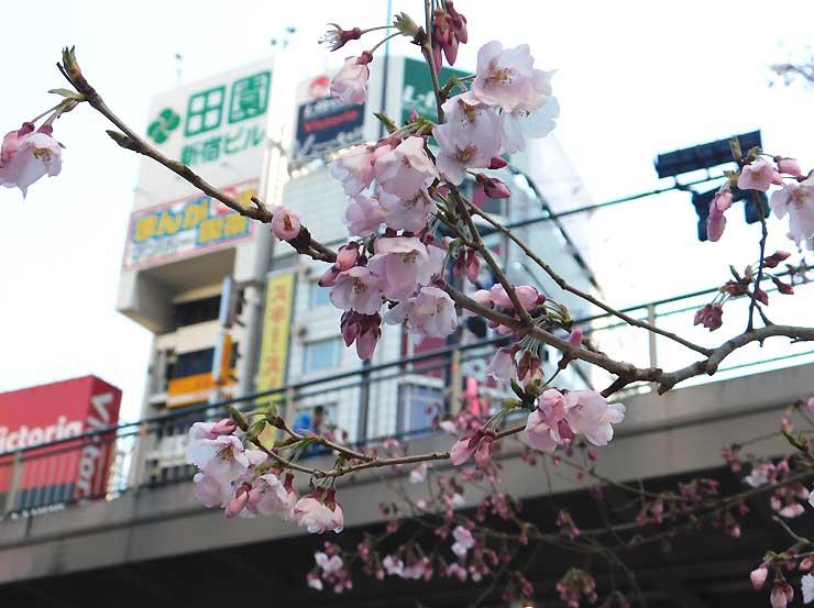 都会の真ん中で咲いたピンクの花々
