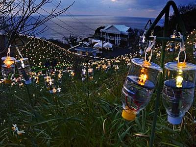幻想的な「明かりの花畑」 越前町・越前岬水仙ランド