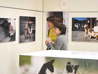 国内外の猫、表情さまざま 山形村で岩合光昭さん写真展