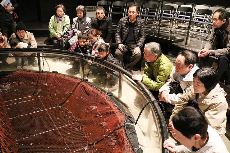 約500匹のホタルイカを入れた水槽をのぞき込む来場者