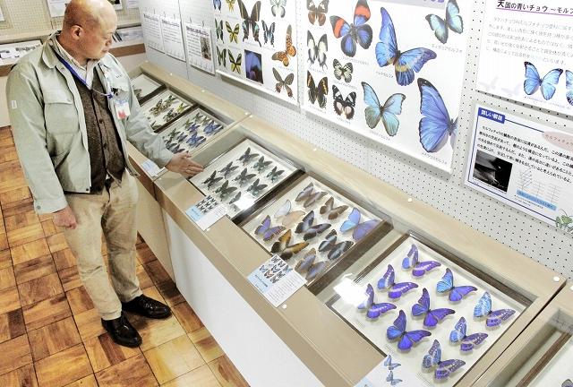 世界の珍しいチョウやガを中心に展示している特別展=29日、福井市自然史博物館