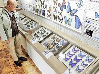 世界の珍しいチョウとガ展示 福井市自然史博物館で2千点