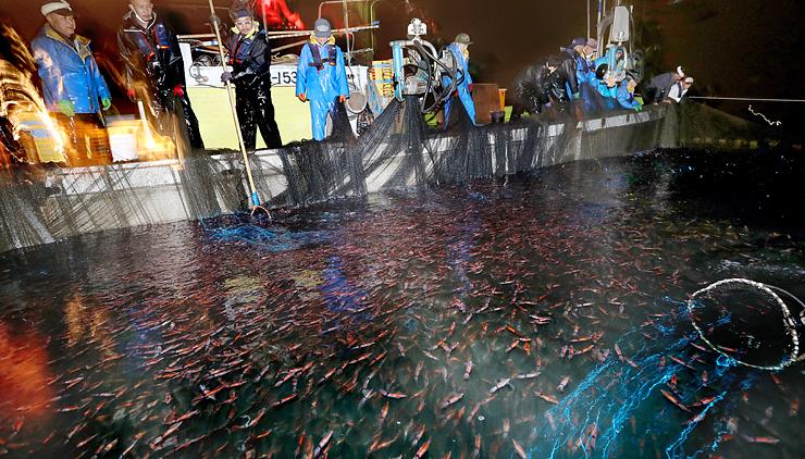 海面を埋める無数のホタルイカ。漁師がたもですくうと青白く光った=30日午前3時34分、滑川沖