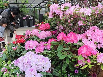 あふれる色 シャクナゲ・ツツジ展 新潟県立植物園
