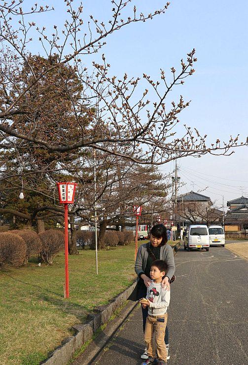 「桜まつり」が開催される新発田城址公園=5日、新発田市