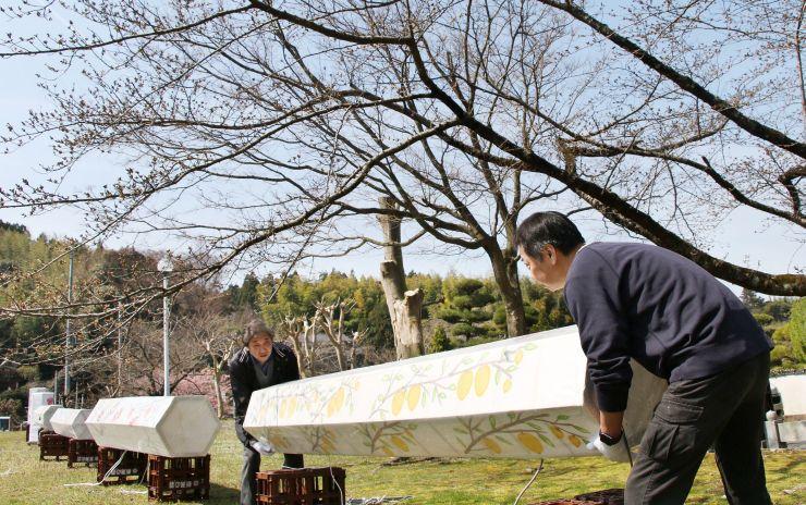 桜のライトアップに向け、ぼんぼりを設置する地元住民=5日、佐渡市真野