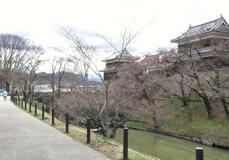ソメイヨシノの開花が遅れている上田城跡公園=7日