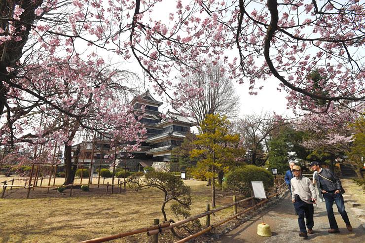 桜の開花が宣言され、観光客でにぎわう松本城本丸庭園=10日午前9時13分、松本市