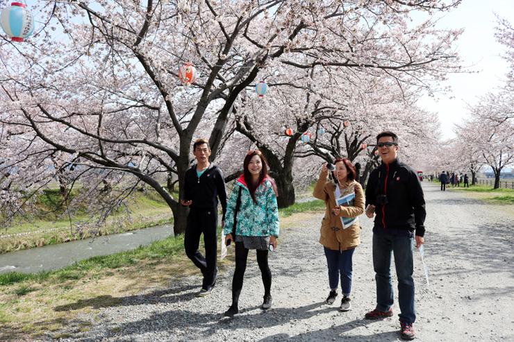 舟川べりの桜を楽しむ台湾の旅行関係者