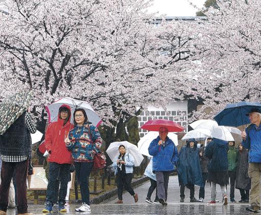 満開の桜を背に記念撮影する観光客=金沢城公園