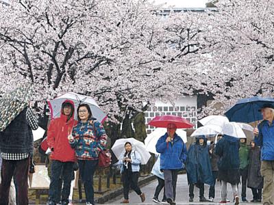 花の雨 金沢城に風情