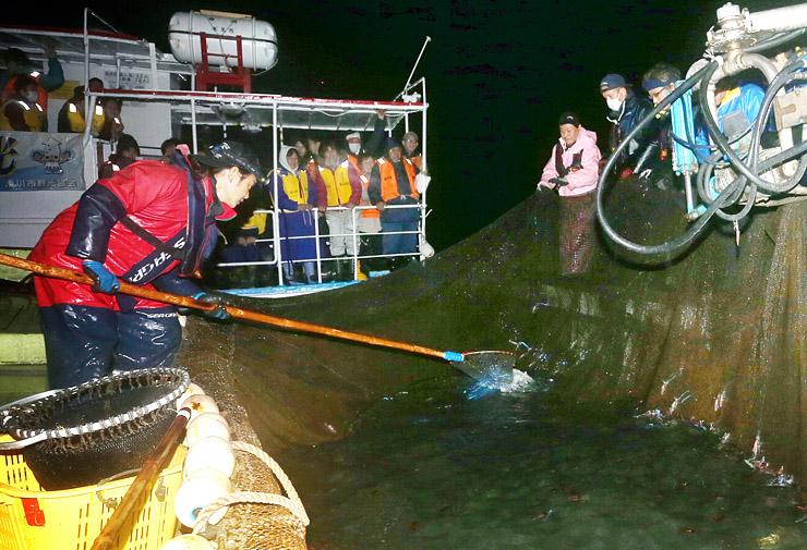 網にかかり、青白い光を放つホタルイカを眺める観光客=午前4時5分ごろ、滑川沖