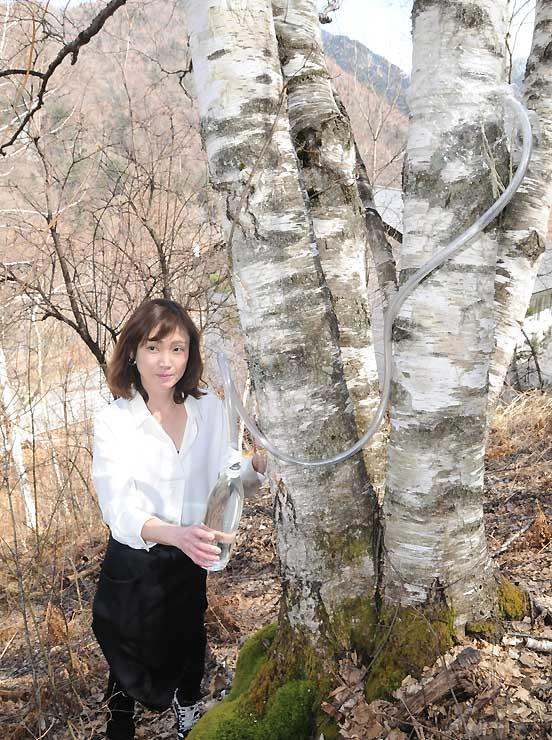 シラカバの幹からホースで樹液を採取する様子