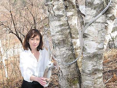 シラカバ樹液の採取体験 木曽駒高原、この時季だけ