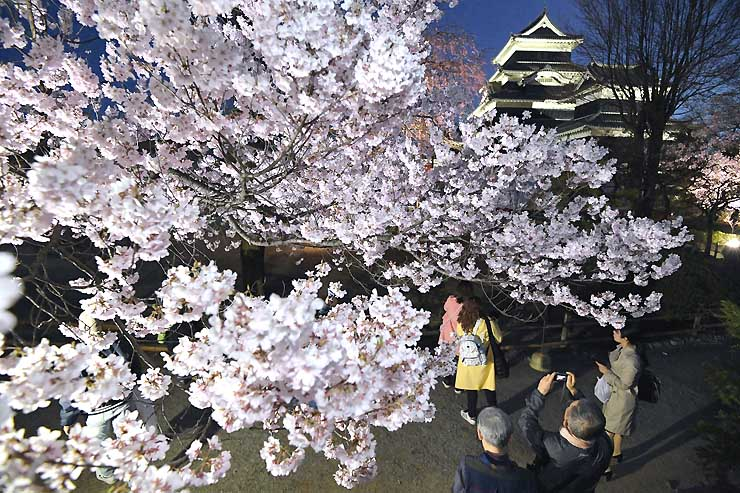 多くの来場者で初日からにぎわった国宝松本城の「夜桜会」=13日