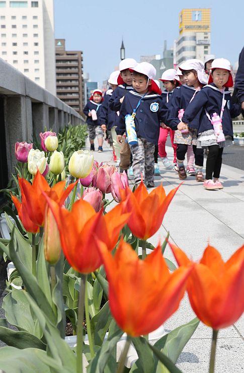 萬代橋を彩るチューリップを眺める園児たち=14日、新潟市中央区