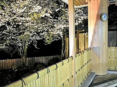 露天風呂から夜桜見物 池田・冠荘 22日までライトアップ
