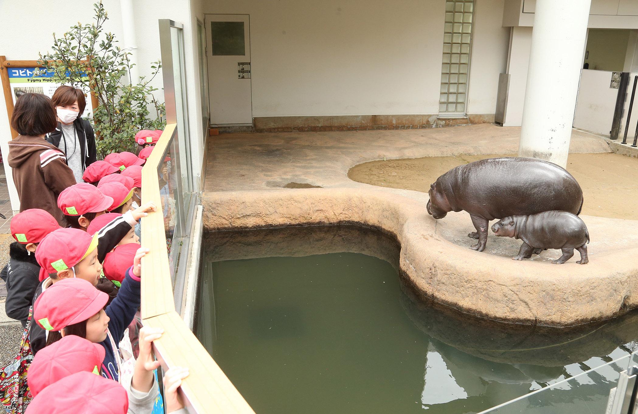 屋外公開が始まったミライ(手前)=能美市のいしかわ動物園