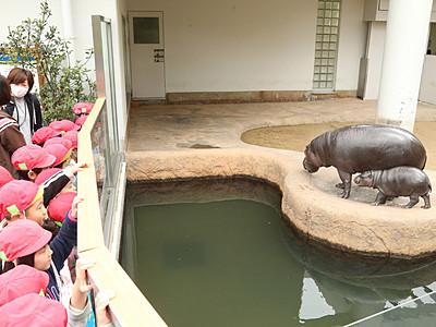 ミライ屋外展示デビュー コビトカバ赤ちゃん、いしかわ動物園