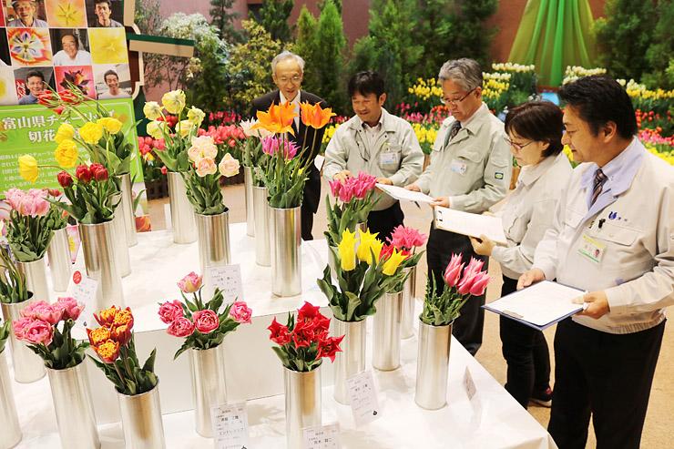 多彩な品種のチューリップが並んだ品評会