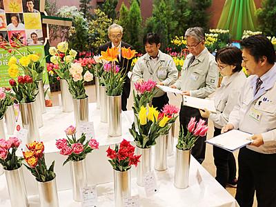 水野さん「紫雲」最高賞 砺波で県チューリップ切り花品評会