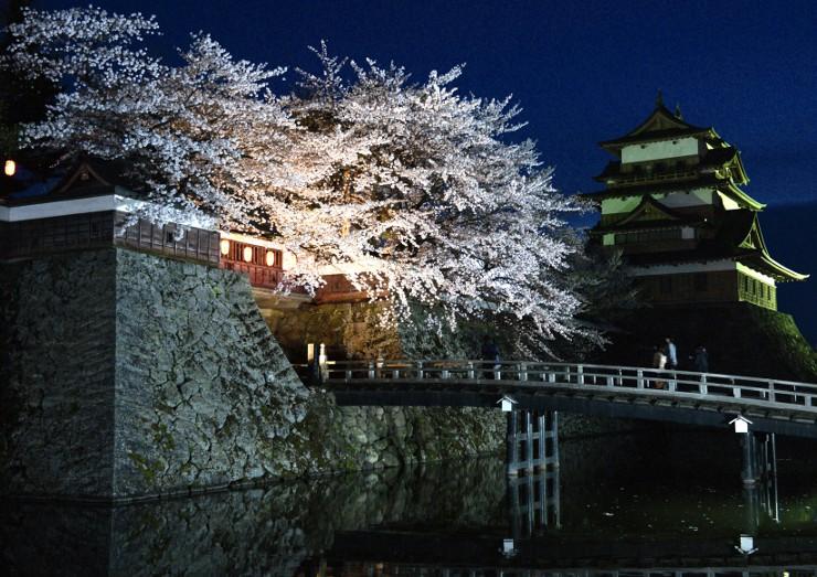 ライトアップされた高島公園の桜=21日