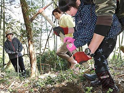 タケノコ狩り、にぎわい 喬木の竹林、採りたて試食も
