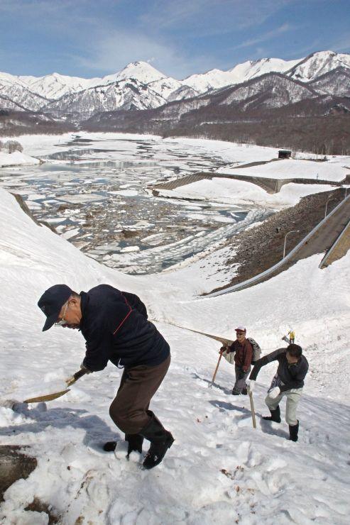 焼山を見下ろす夢見平遊歩道の斜面で除雪作業に汗を流す「守る会」会員ら=25日、妙高市