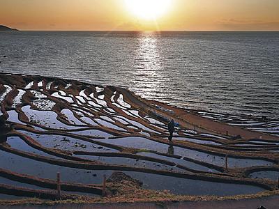 夕日浴び輝く千枚田 輪島