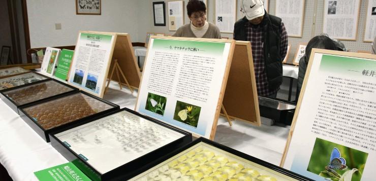 鳩山さんが飼育したチョウの標本などが並ぶ企画展