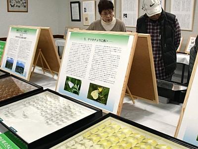 鳩山元総務相が育てたチョウなど展示 信州昆虫資料館