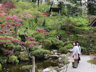 村上・普済寺 心和む庭園美 春の一般公開