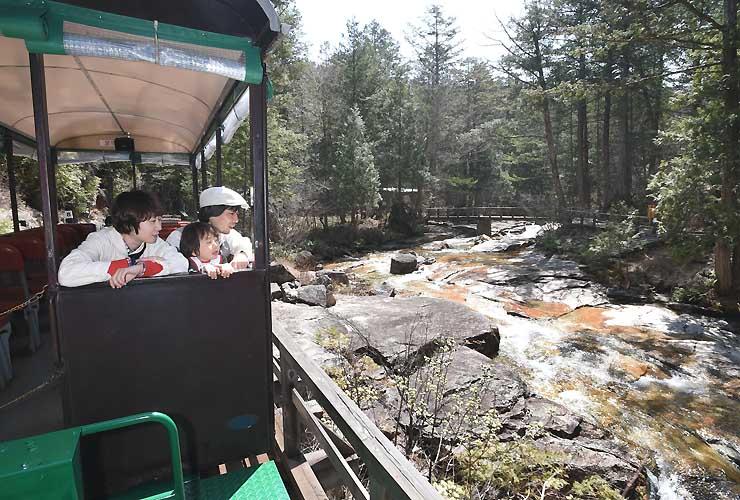 森林鉄道で涼しい風に吹かれながら景色を楽しむ家族連れ=30日、上松町の赤沢自然休養林